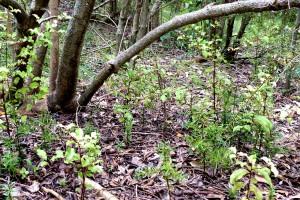 2014-natural regeneration